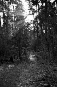 Klövensteen Weg 2